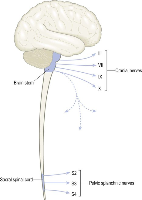 craniosacral outflow