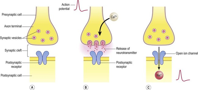 what substance is found in synaptic vesicles of the axon terminal A substance stored in the synaptic vesicles that is released when the axon terminal is excited by a nervous impulse the substance then travels across the synaptic.