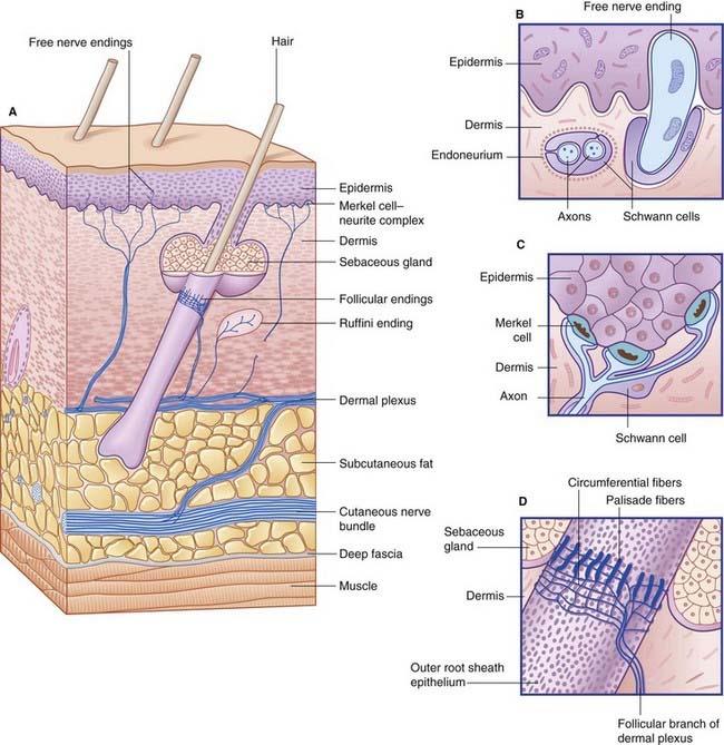 View Free Nerve Endings In Skin Wallpapers