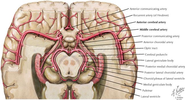 Vasculature Neupsy Key