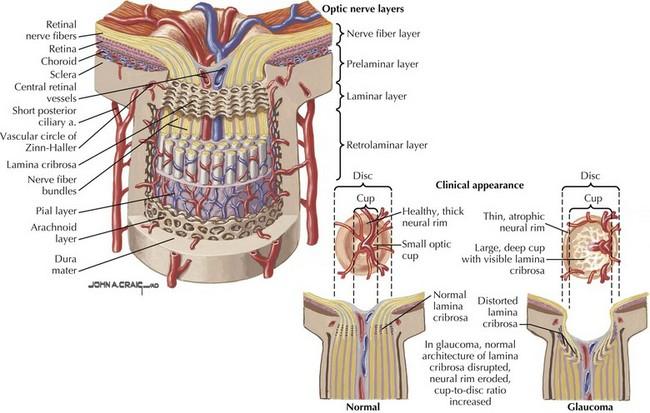 Cranial Nerve II | Neupsy Key