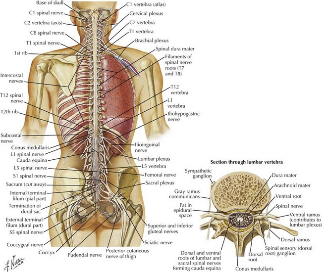 Anatomic Aspects Of Spinal Cord Disorders Neupsy Key