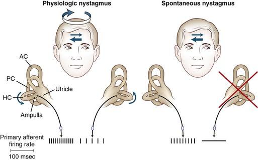 developmental eye movement test pdf