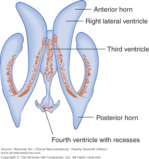 Ventricles and coverings of the brain neupsy key for Floor of 4th ventricle