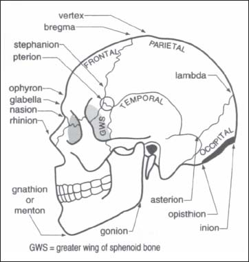 6 Cranial Anatomy And Approaches