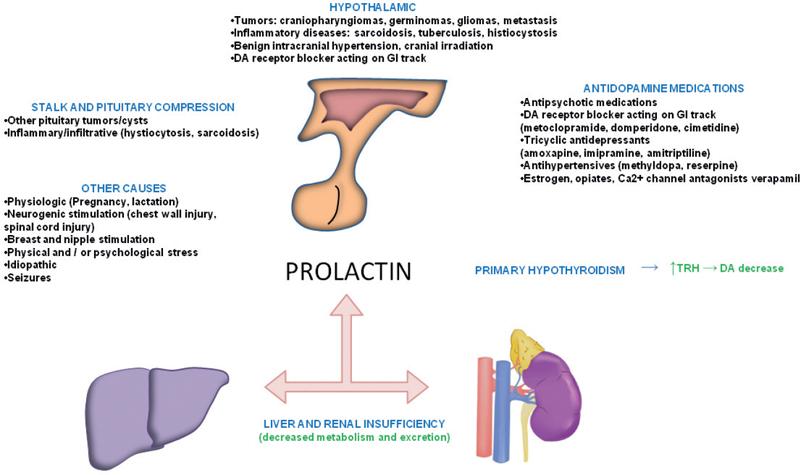 Does clomid increase prolactin levels