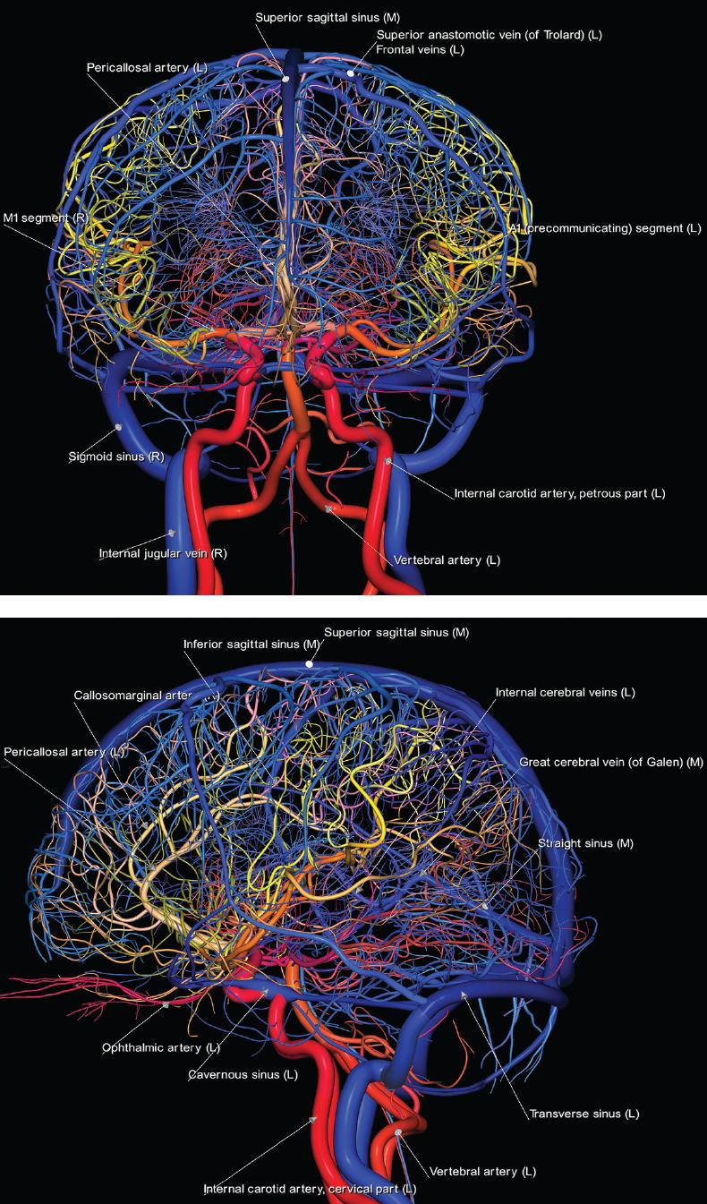 Brain | Neupsy Key
