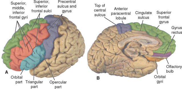 Gross Anatomy And General Organization Of The Central Nervous System