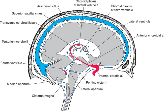 Ventricles and cerebrospinal fluid neupsy key figure 5 10 path of csf circulation from its formation in the ventricles to its absorption into the superior sagittal sinus ccuart Choice Image