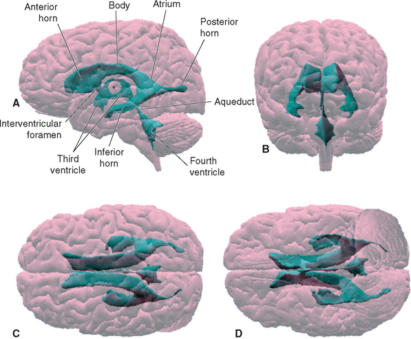 Ventricles and Cerebrospinal Fluid   Neupsy Key