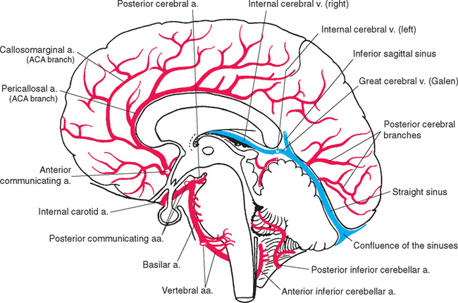 Superior cerebellar artery together with 9876179 additionally 1399284 as well Cerebral Circulation By Drarshad besides Cv R Cerebral Blood Flow Flash Cards. on brain arterial system