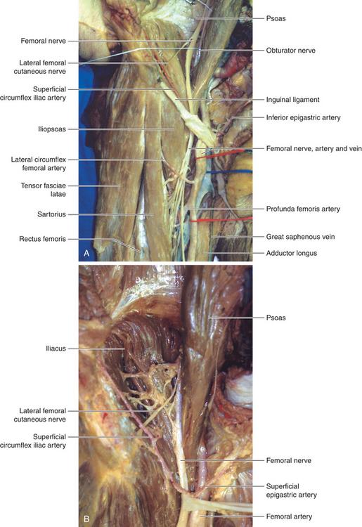 Femoral Nerve | Neupsy Key