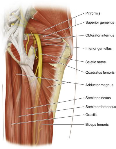 Sciatic Nerve Neupsy Key