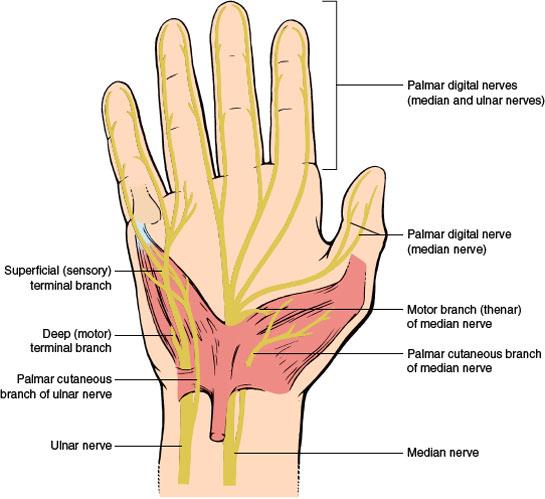 Peripheral Nerves   Neupsy Key