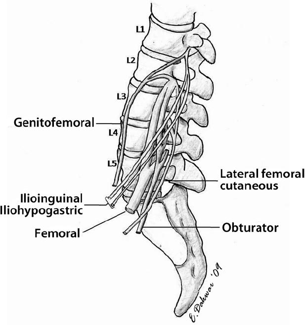 Minimally Invasive Lateral Retroperitoneal Trans-Psoas