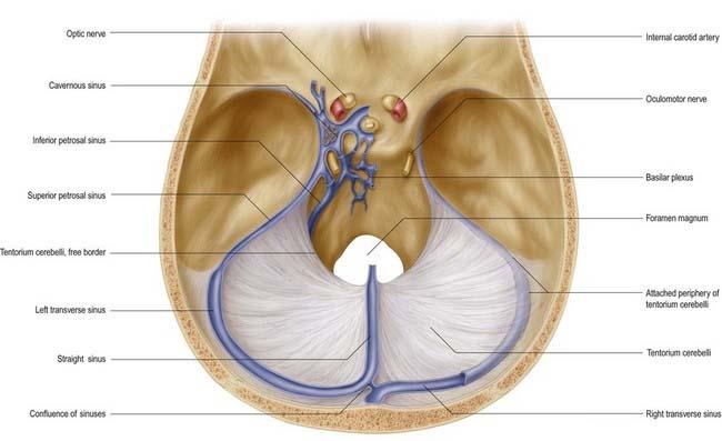 Tentorium cerebelli anatomy