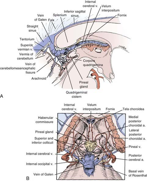 Anatomy of pineal gland