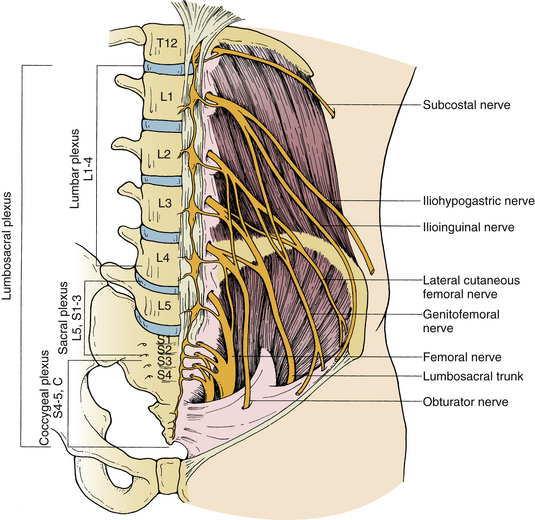 lumbar and sacral spine | neupsy key, Muscles