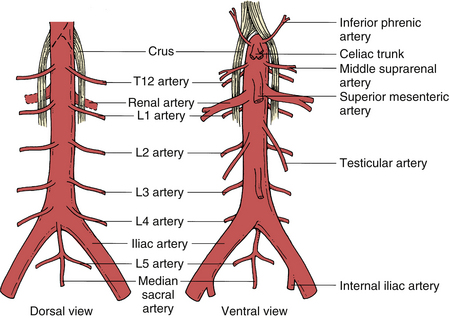 Lumbar And Sacral Spine Neupsy Key