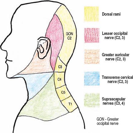 The Diagnostic Anatomy of the Brachial Plexus   Neupsy Key