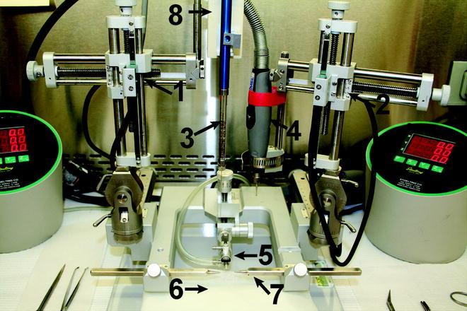 Sterotaxic Injection in Rat Brain   Doovi