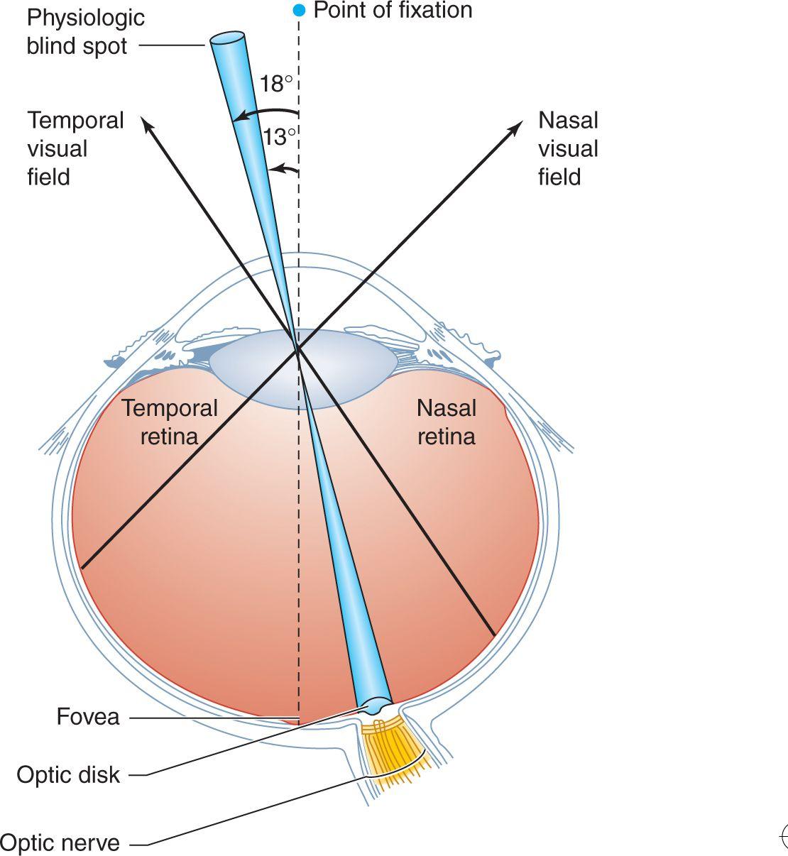 Neuro Ophthalmic Disorders Neupsy Key