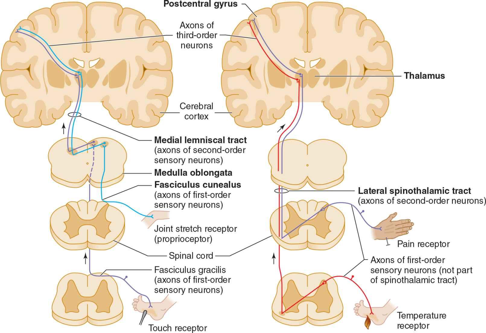 sensory ataxia