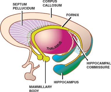 Neuroembryology | Neupsy Key