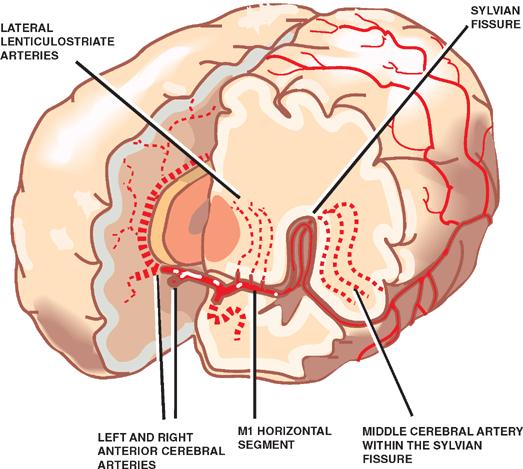 Vascular System | Neupsy Key