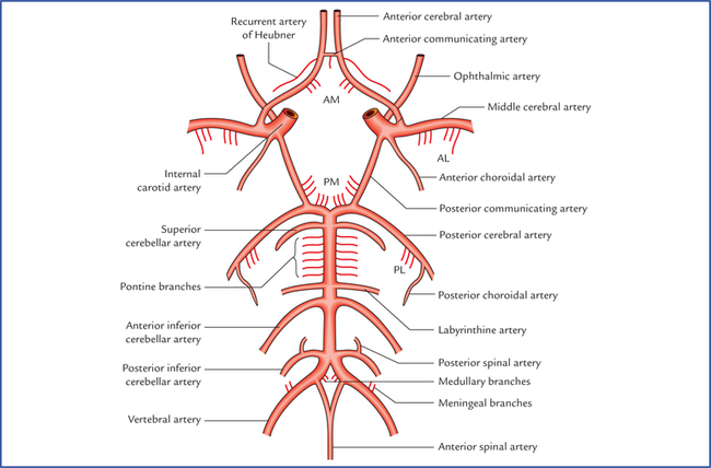 Blood supply of the brain | Neupsy Key