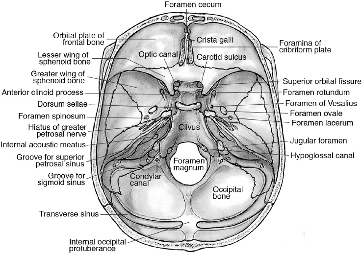 Anatomy Of The Skull Base And Related Structures Elements Of