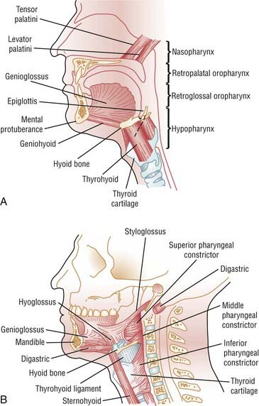 Anatomy and Physiology of Upper Airway Obstruction   Neupsy Key