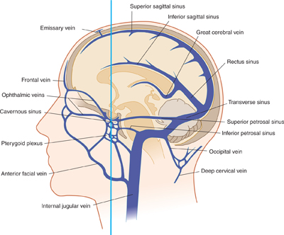 Image result for dural sinuses