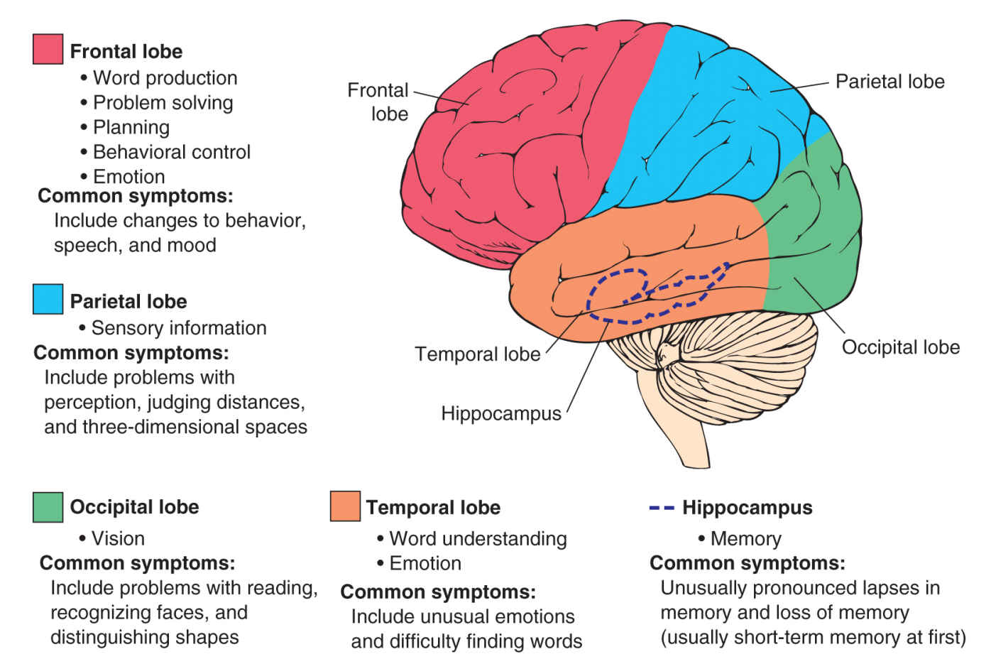 The Scope of Dementia: Variants, Symptoms, Stages, and ...