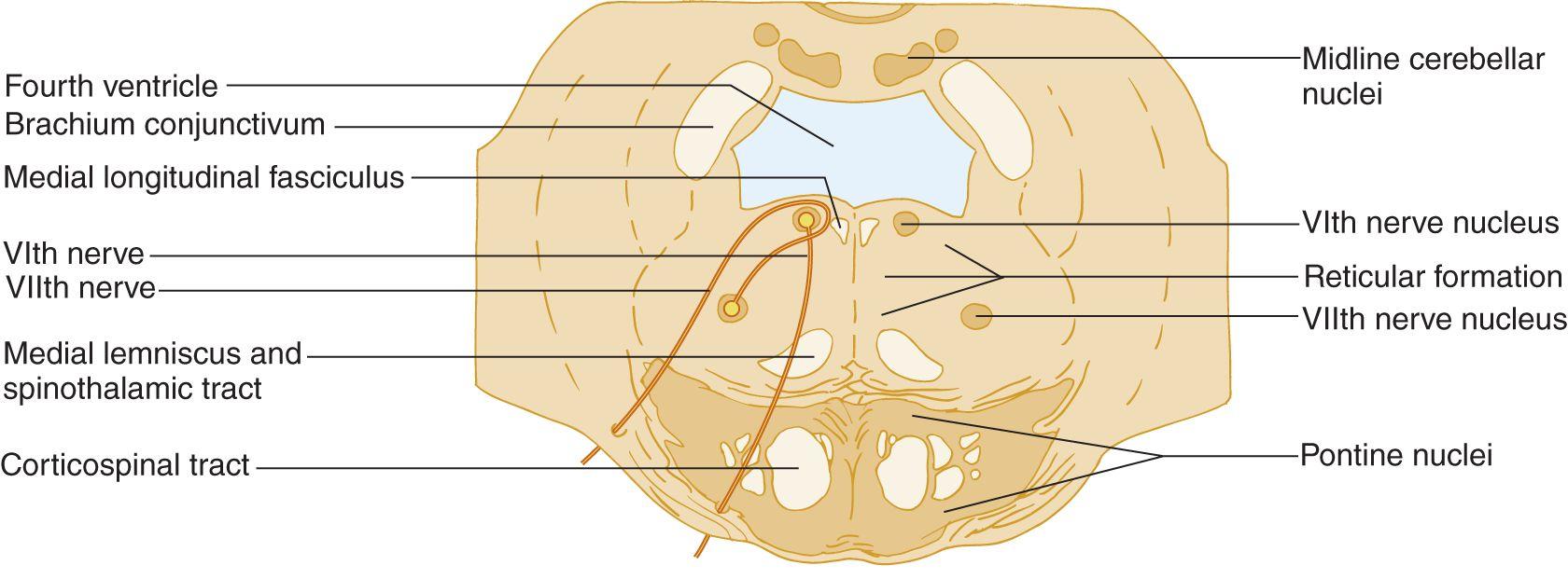 Examination Of The Motor Cranial Nerves V Vii Ix X Xi And Xii